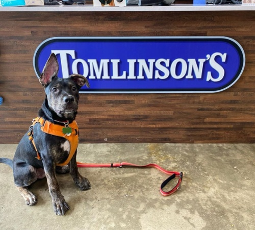 Interview: How Tomlinson's Feed is Empowering Store Teams